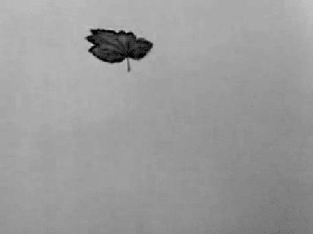 Фото Падающий лист, превращающийся в человека (© Krista Zarubin), добавлено: 20.05.2012 14:33