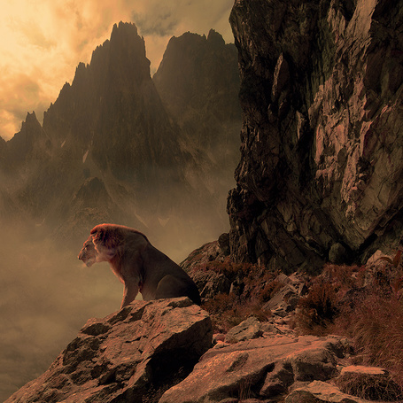 Фото Лев в горах. Фотограф Михал Карц (© Natko), добавлено: 21.05.2012 00:12