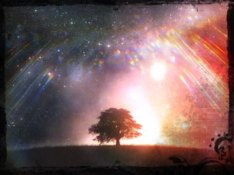 Фото Дерево на фоне сияния в ночном небе