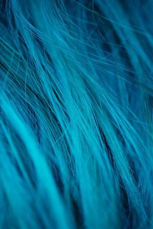 Фото Бирюзовые волосы (© Mary), добавлено: 23.05.2012 12:50