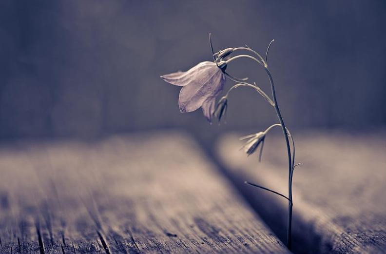 цветы картинка одинокая боитесь воров, оберег