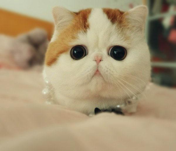 Фото Милый котенок экзот с бусами