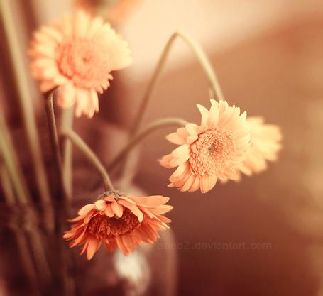 Фото Оранжевые герберы в вазе, фотограф Essa Al Mazroee (© Radieschen), добавлено: 01.06.2012 14:51