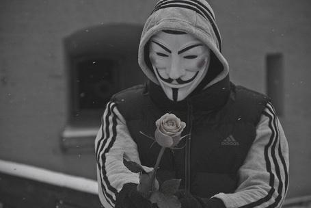 Фото Парнь в маске Гай Фокса дарит розу