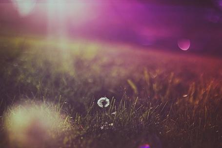 Фото Одинокий маленький одуванчик  (фотограф Кристина Манченко) (© Кофе мой друг), добавлено: 03.06.2012 12:13