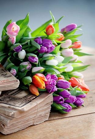 Фото Пачки денег лежат под букетом тюльпанов (© Штушка), добавлено: 03.06.2012 16:54