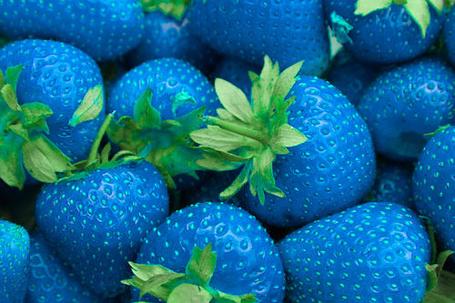 Фото Синяя клубника (© Antuannet), добавлено: 05.06.2012 03:22