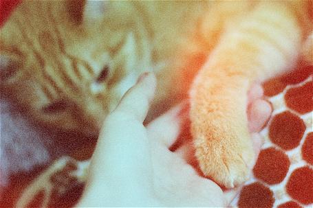 Фото Рыжий кот тянет лапку к руке (© zebra_marti), добавлено: 05.06.2012 08:05