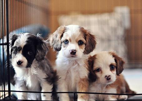 Фото Три милых щенка
