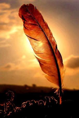 Фото Перо в лучах заката (© Antuannet), добавлено: 10.06.2012 04:19