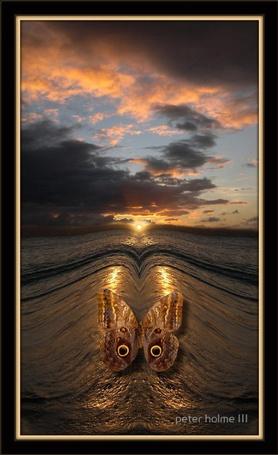Фото Бабочка и море на закате. Фотограф Питер Холм ( Peter Holme III)