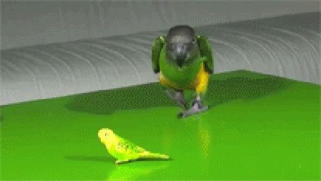 Фото Попугай берёт лапкой игрушку