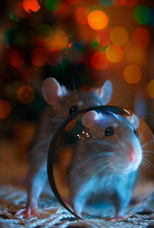 Фото Мышонок перед увеличительным стеклом (© Anatol), добавлено: 19.06.2012 01:35