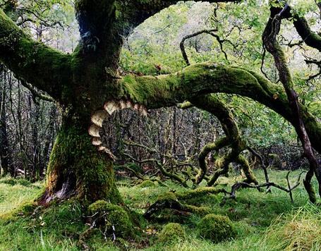 Фото Зубастое дерево (© Anatol), добавлено: 19.06.2012 14:17