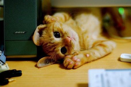 Фото Маленький рыжий котенок лежит на спине (© Sveta_Sherer), добавлено: 22.06.2012 05:16