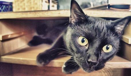 Черный нарисованный кот