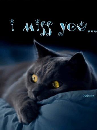 Фото Серый кот с жёлтыми глазами лежит на постели ('i miss you') (© Флориссия), добавлено: 24.06.2012 22:30