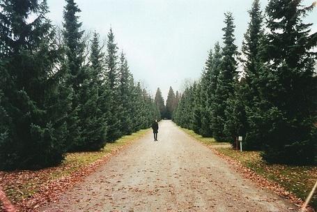 Фото Дорога, проходящая около леса, по которой вдалеке идет человек (© Юки-тян), добавлено: 25.06.2012 00:13