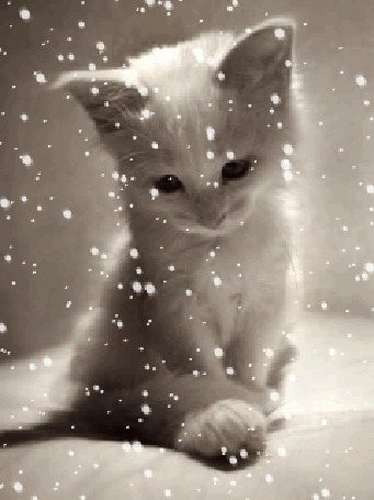Фото Белый котёнок под снегопадом (© Флориссия), добавлено: 25.06.2012 10:54
