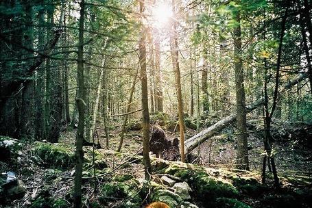 Фото В лесу (© Юки-тян), добавлено: 25.06.2012 11:15