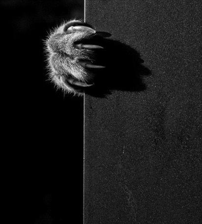 Фото Кошачья лапа с когтями (© Sveta_Sherer), добавлено: 27.06.2012 00:16