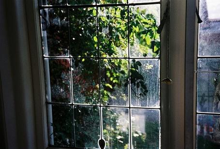 Фото Вид из окна на зеленую листву (© Юки-тян), добавлено: 28.06.2012 04:40