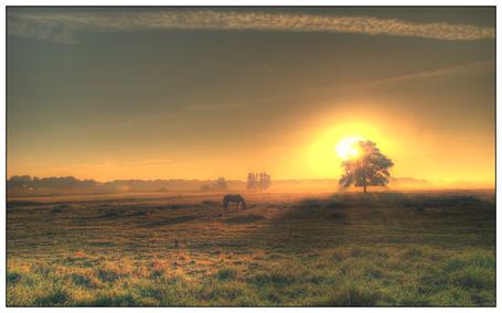 Фото Лошадь пасётся в поле на закате (© Флориссия), добавлено: 28.06.2012 13:49