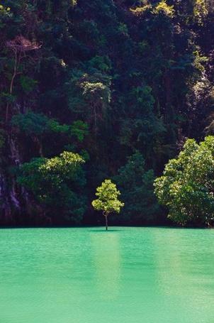 Фото Дерево у побережья