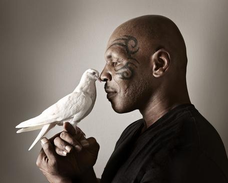 Фото Известный американский боксер Майк Тайсон / Michael Tyson с белым голубем, фотографы Paul Mobley and Mike Campau