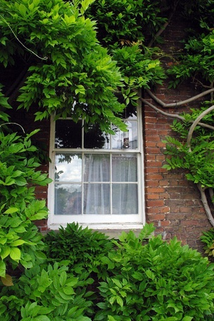 Фото Дом, у которого растет множество растений (© Юки-тян), добавлено: 29.06.2012 16:08