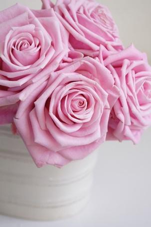 Фото Розовые розы в банке (© Юки-тян), добавлено: 29.06.2012 18:03