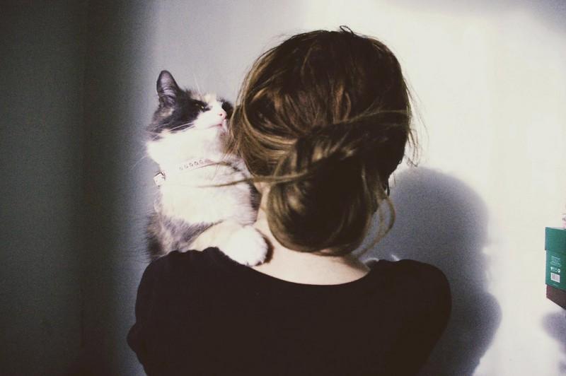 Картинка черной кошки на обои - 88040