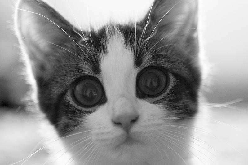 Кот с большими удивленными глазами