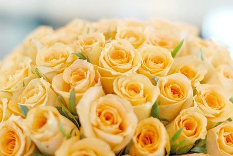 Фото Желтые розы (© Юки-тян), добавлено: 02.07.2012 21:29