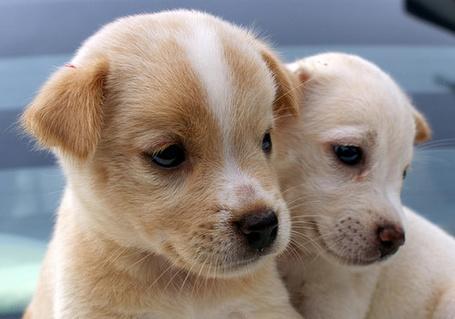 Фото Два маленьких щеночка