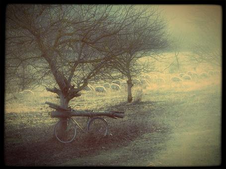 Фото Велосипед загруженный брёвнами стоит возле дерева (© Флориссия), добавлено: 04.07.2012 12:57