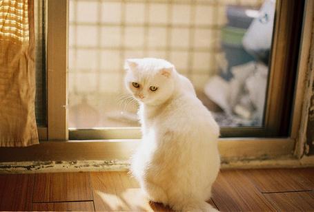 Фото Белый кот сидит у двери