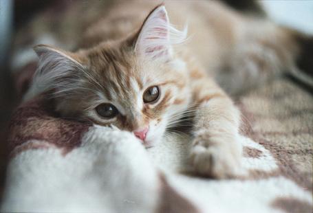 Фото Рыжий кот вытянул лапку вперед (© Кофе мой друг), добавлено: 04.07.2012 13:56