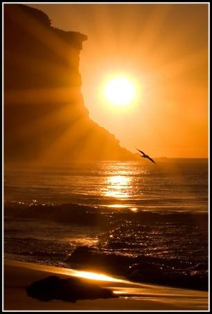 Фото Солнце над морем, в небе - чайка (© Anatol), добавлено: 04.07.2012 15:03