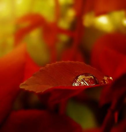 Фото Осенняя капелька (© nataaaaaaa), добавлено: 04.07.2012 16:27