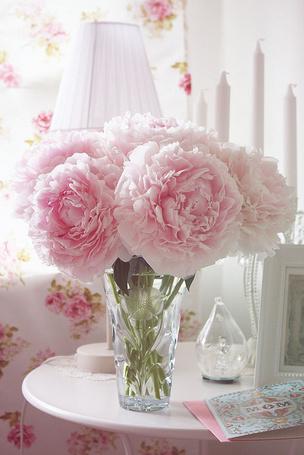 О цветах всё и всем Цветущие комнатные растения фото и
