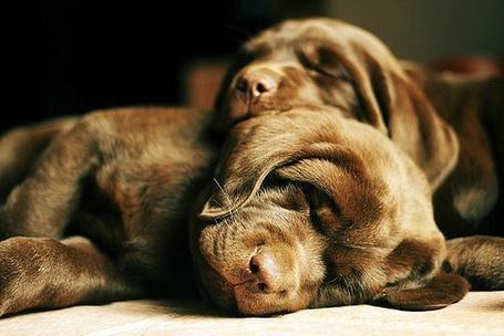 Фото Милые собачки спят