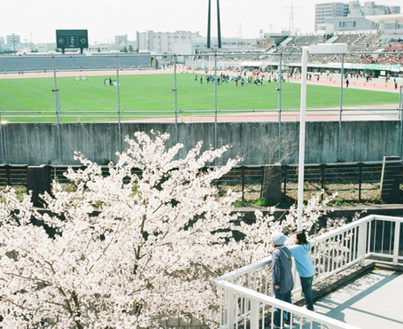 Фото Девушка и парень с балкона любуются на сакуру. Рядом футбольный стадион, на котором идет матч