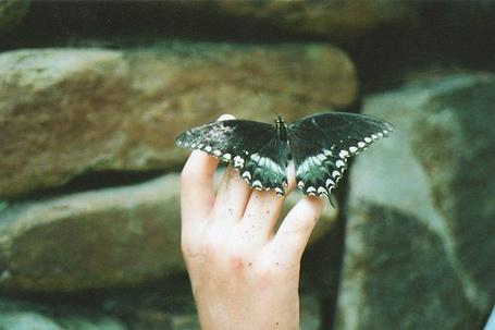 Фото У человека на руке сидит бабочка (© Юки-тян), добавлено: 08.07.2012 18:32