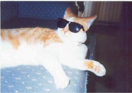 Фото Крутой кот в солнцезащитных очках (© Юки-тян), добавлено: 08.07.2012 22:42