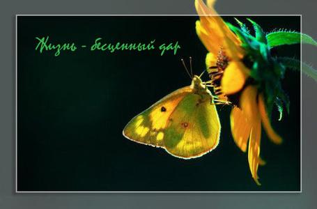 Фото Бабочка на цветке (Жизнь - бесценный дар) (© nataaaaaaa), добавлено: 09.07.2012 12:10