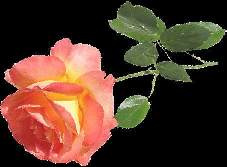 Фото Красивая жёлто - красная роза (© nataaaaaaa), добавлено: 09.07.2012 12:24