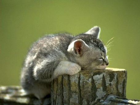 Фото Котик спит на пеньке (© Mary), добавлено: 10.07.2012 00:13
