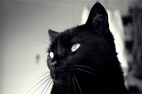 Фото Черный кот задумчиво смотрит в сторону