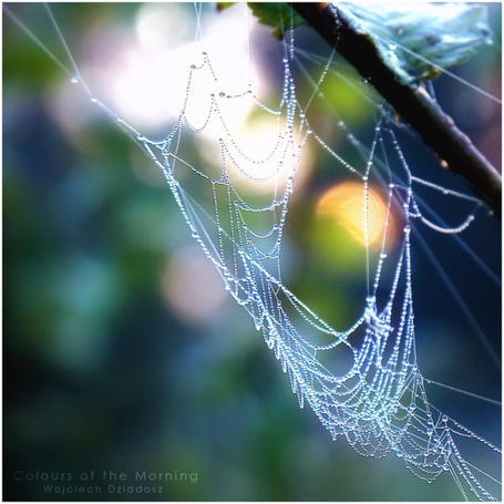 Фото Паутина в каплях росы (Colours of the Morning. Wojciech Dziadosz) (© Юки-тян), добавлено: 11.07.2012 21:29